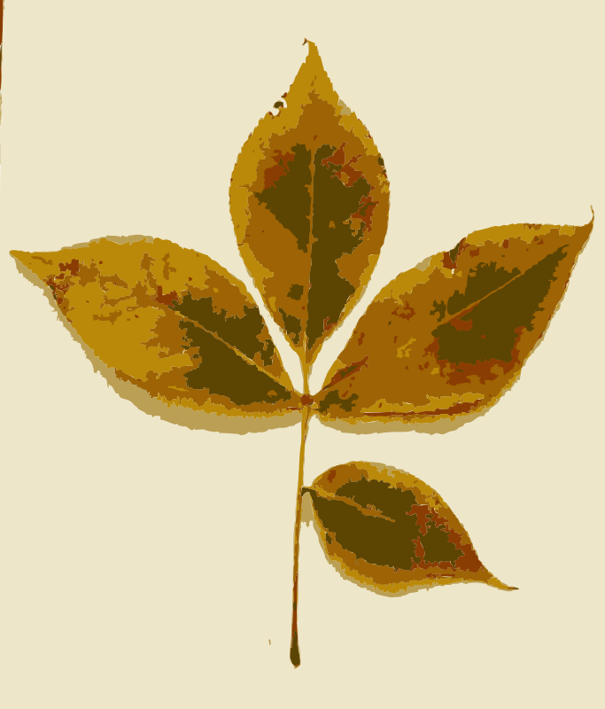 Free Various Missouri tree leaves