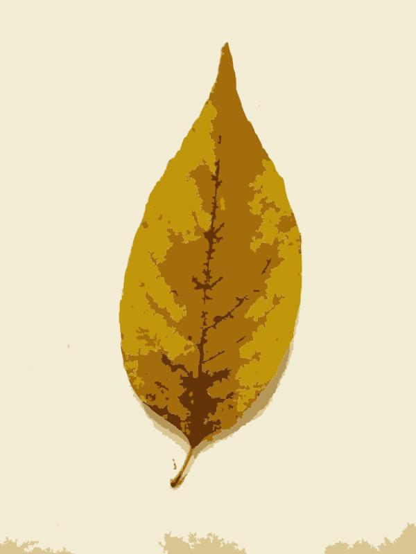 Free Missouri Fall Tree Leaves