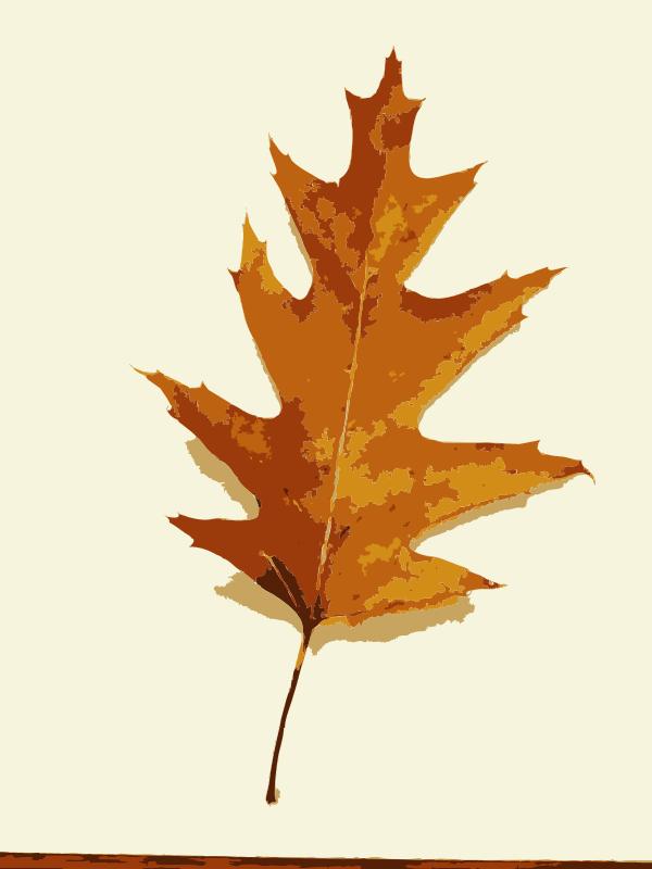 Free More fall tree leaves 1
