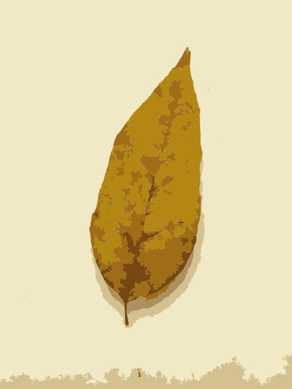Free Fall Leaves 1