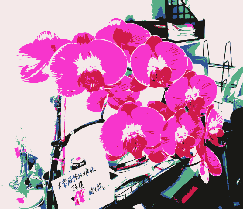 Free An orchid for jilllio