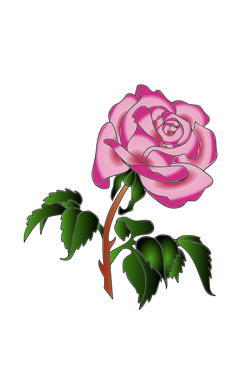 Free Rose in colors