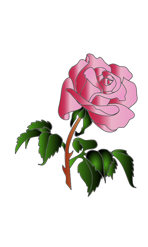Free Rose colors