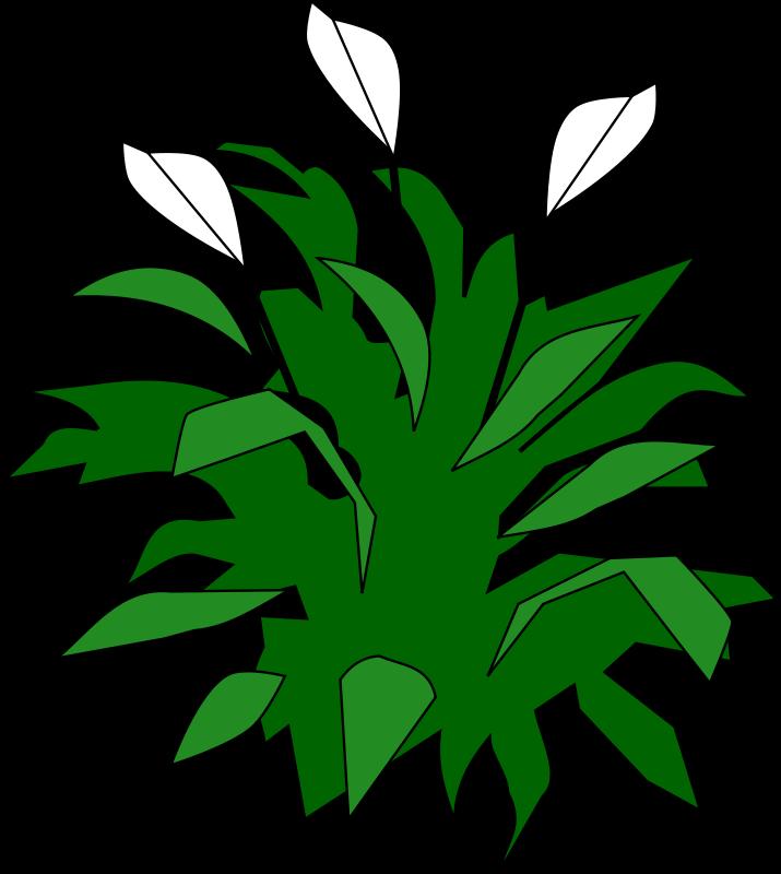 Free Spathiphyllum
