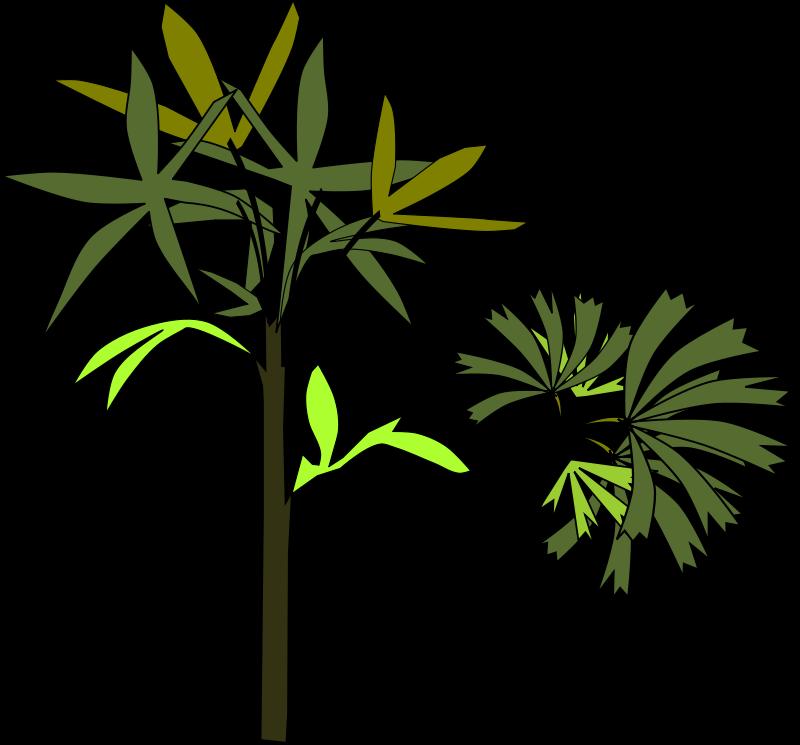 Free Palmeira raphis