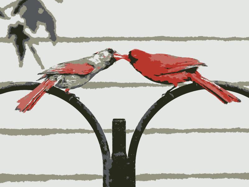 Free Love birds