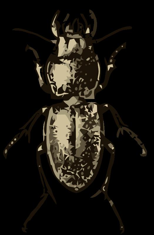 Free Pasimachus depressus