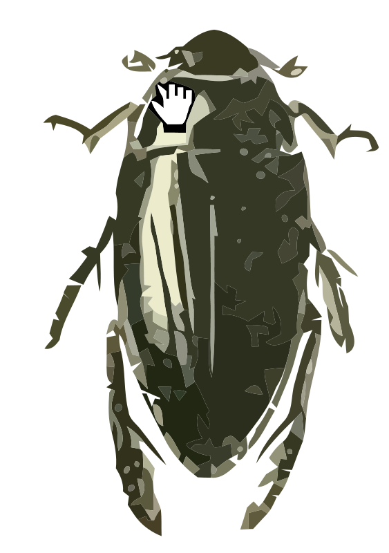 Free Hydrophilus triangularis