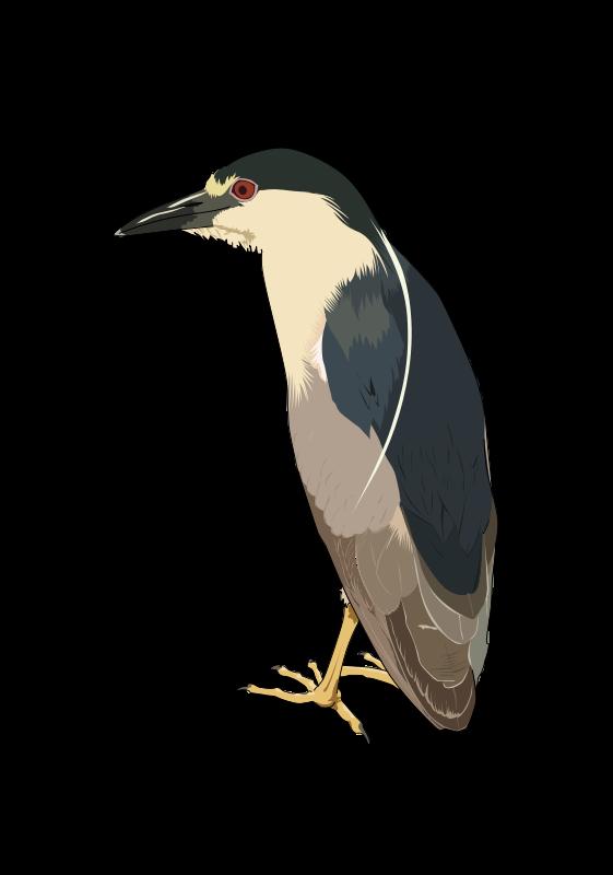 Free Bihoreau gris - Night heron