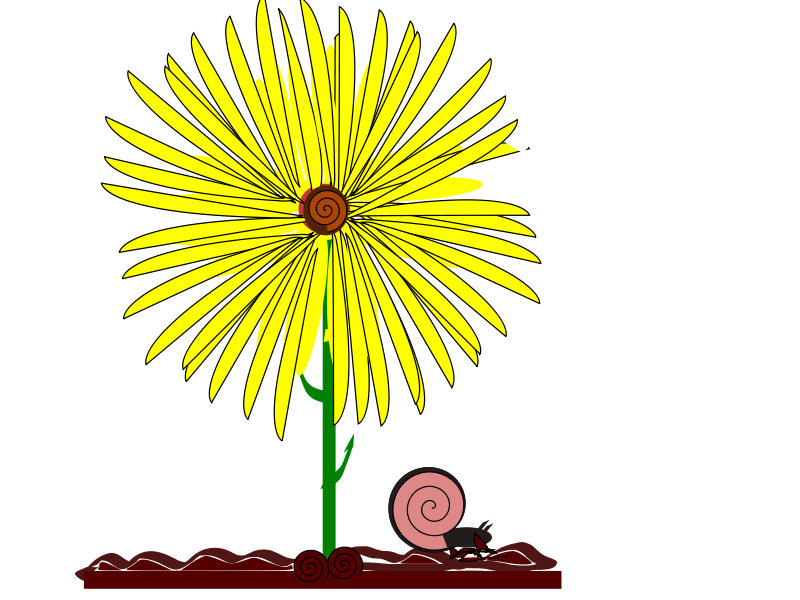 Free yellow flower and snail