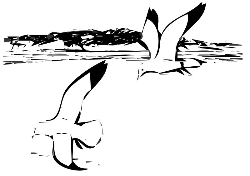 Free Herring Gulls 2