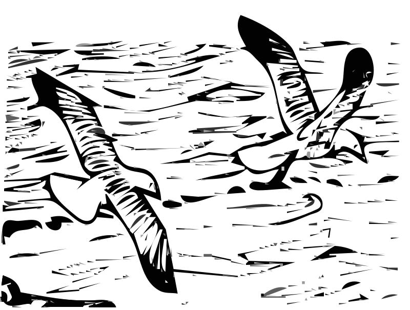 Free Herring Gulls 5