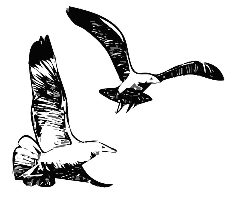 Free Herring Gulls 1