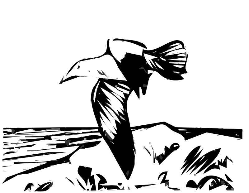 Free Herring Gulls 4