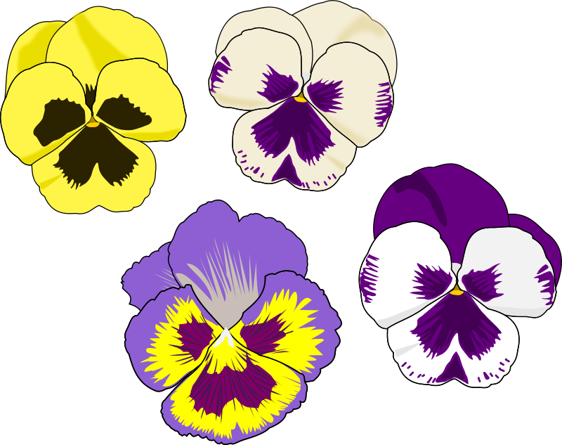 Free Pansy Selection