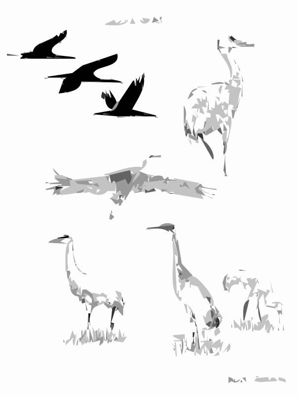 Free Sandhill Cranes