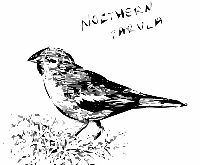 Free Northern Parula Bird