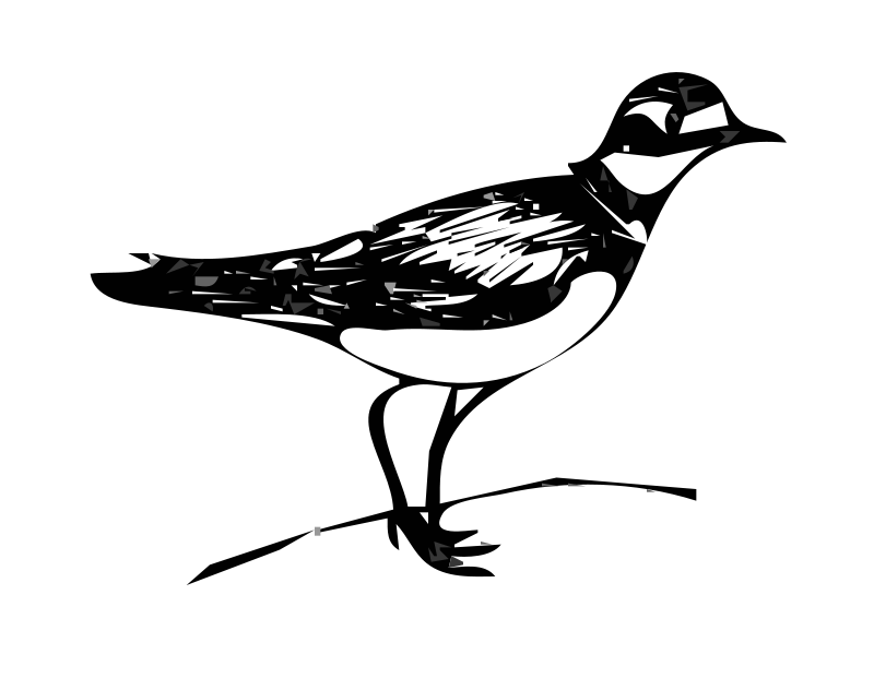 Free killdeer bird