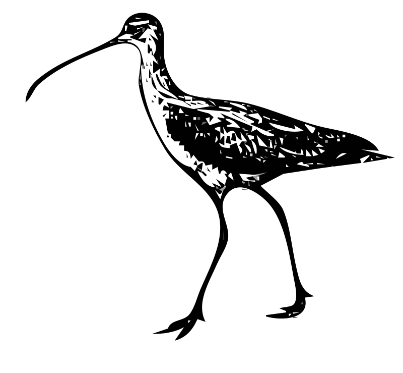 Free Longbilled Curlews 1