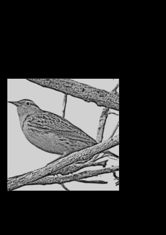 Free Western Meadowlark