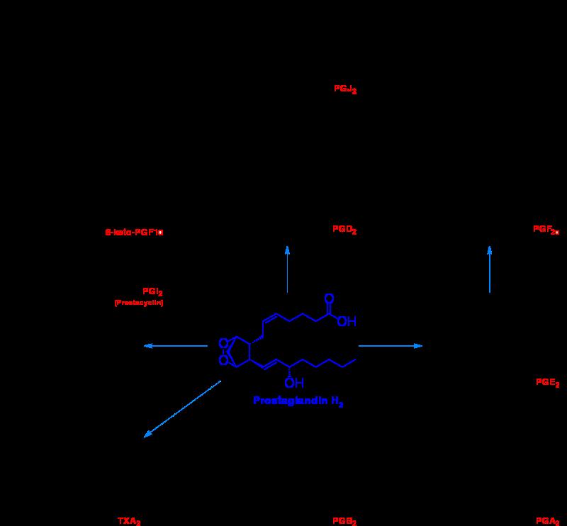 Free Prostanoid Synthesis