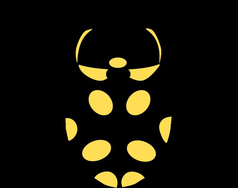 Free Eriopis Canrash Bug