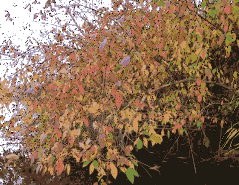 Free Bush in Autumn