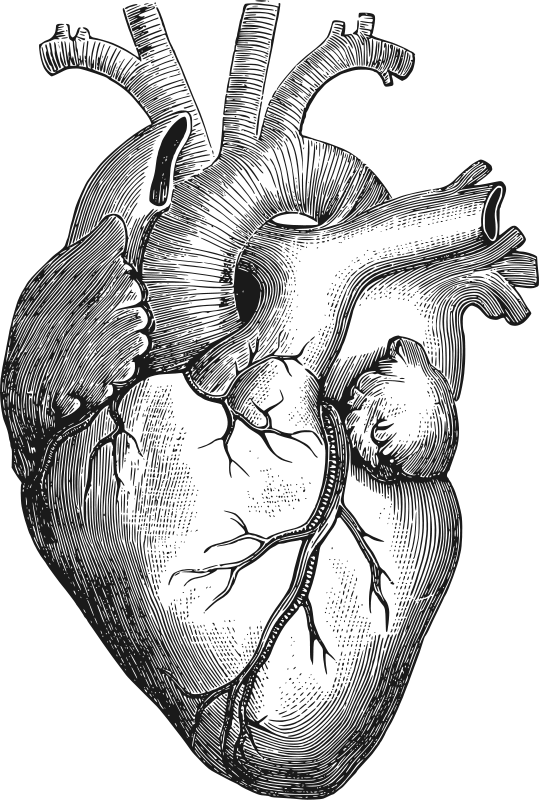 Free Anatomical Heart
