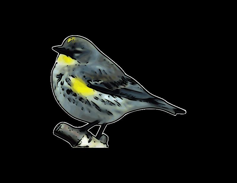 Free Warbler