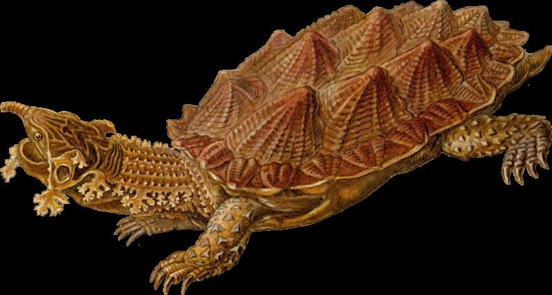 Free Prehistoric Turtle 5
