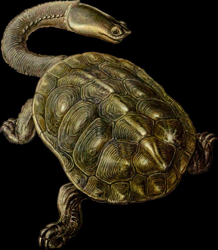 Free Prehistoric Turtle 2