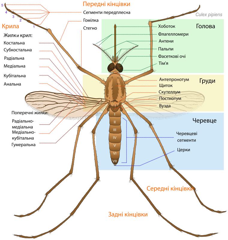 Free Mosquito parts UA