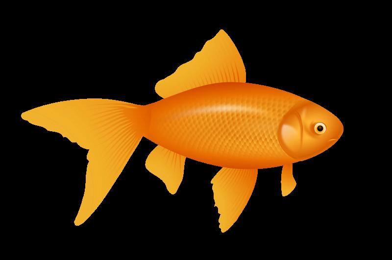 Free Goldfish, auksinė žuvelė