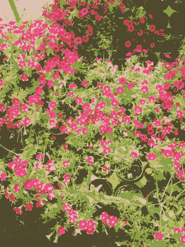 Free Missouri aiflowers 3