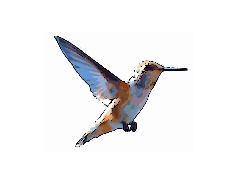 Free Rufous Hummingbird