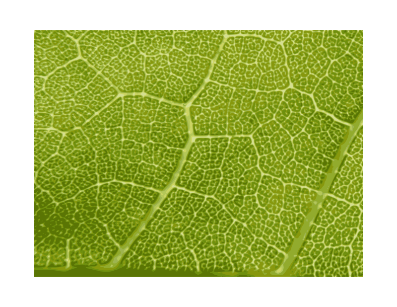 Free Maple Leaf Close-up - texture