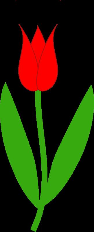 Free Red Tulip