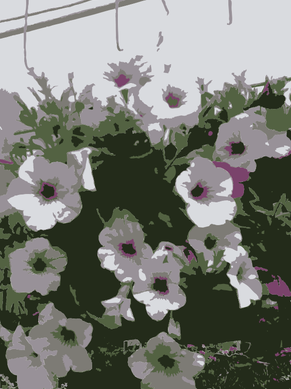 Free So many Missouri aiflowers flowers 3