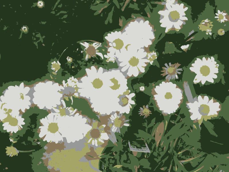 Free So many Missouri aiflowers flowers 1