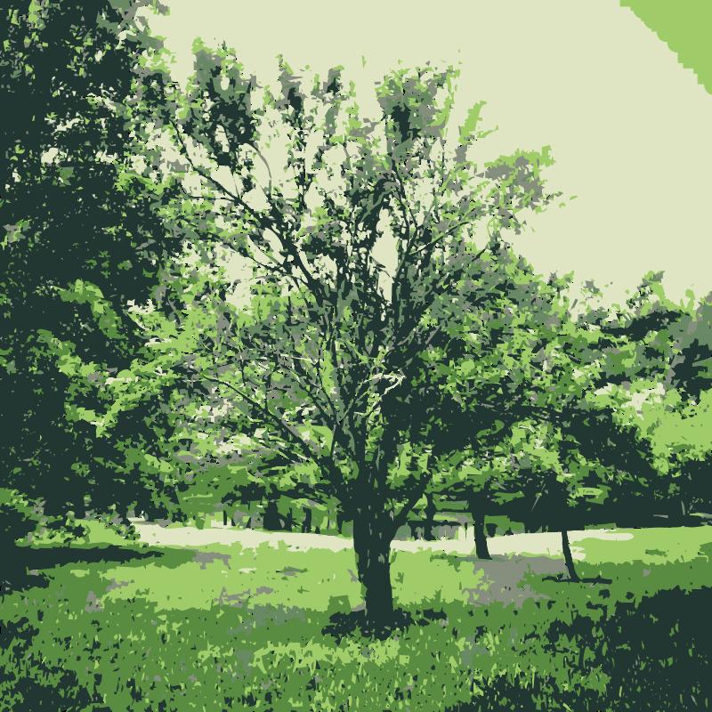 Free Green nature 1