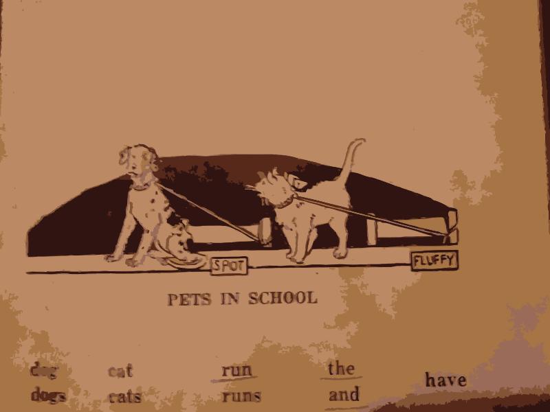 Free Pets in School