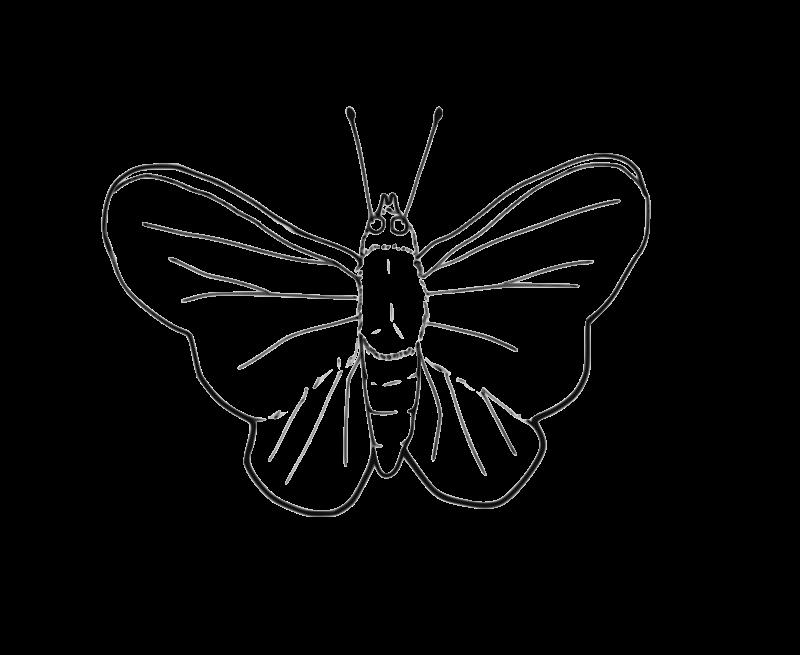 Free Butterfly (line art)