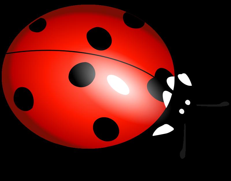 Free ladybug, ladybirds, boružė