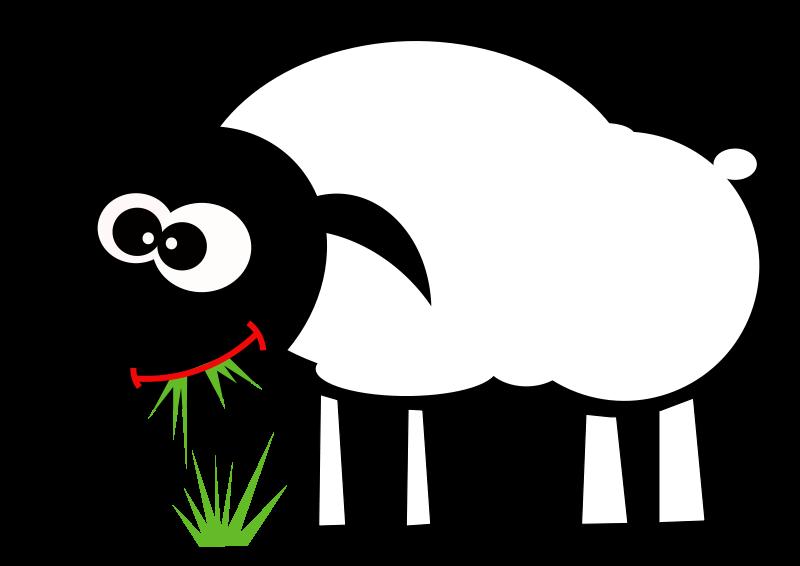 Free Grazing sheep