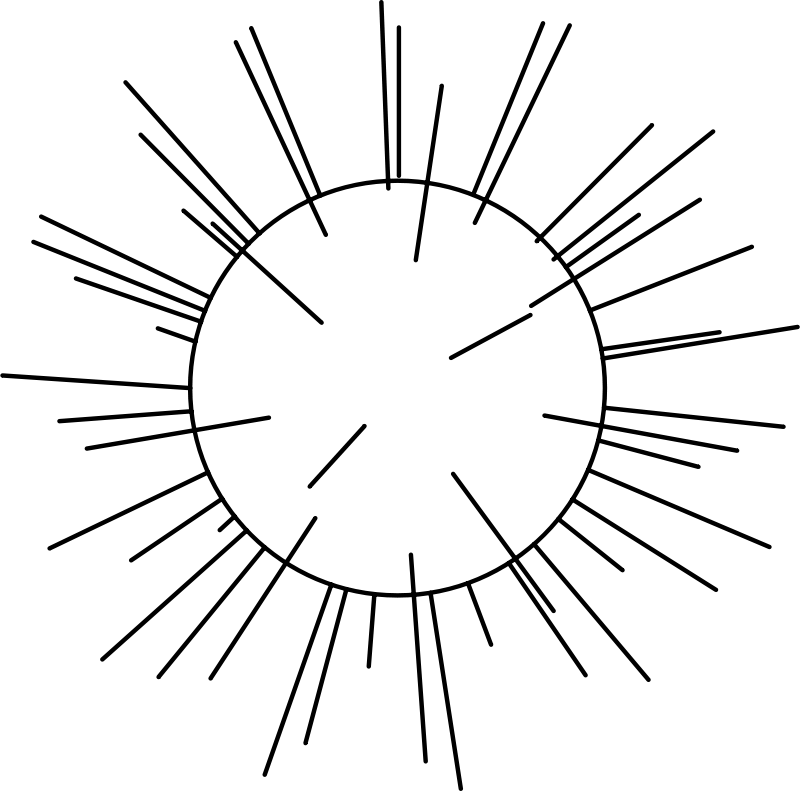Free Radiolaria