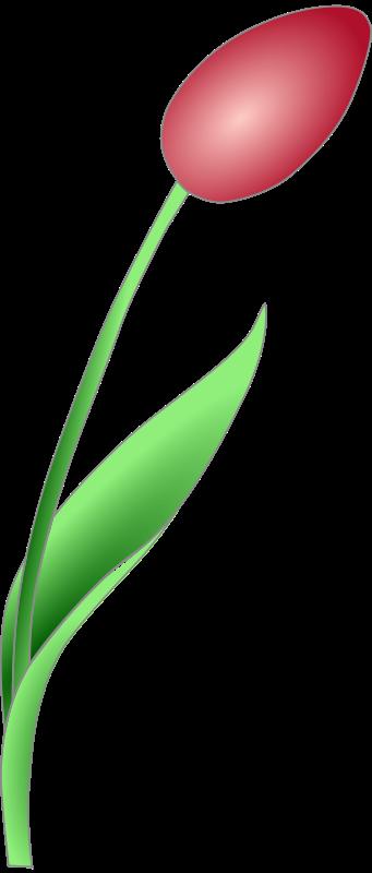 Free Simple Tulip