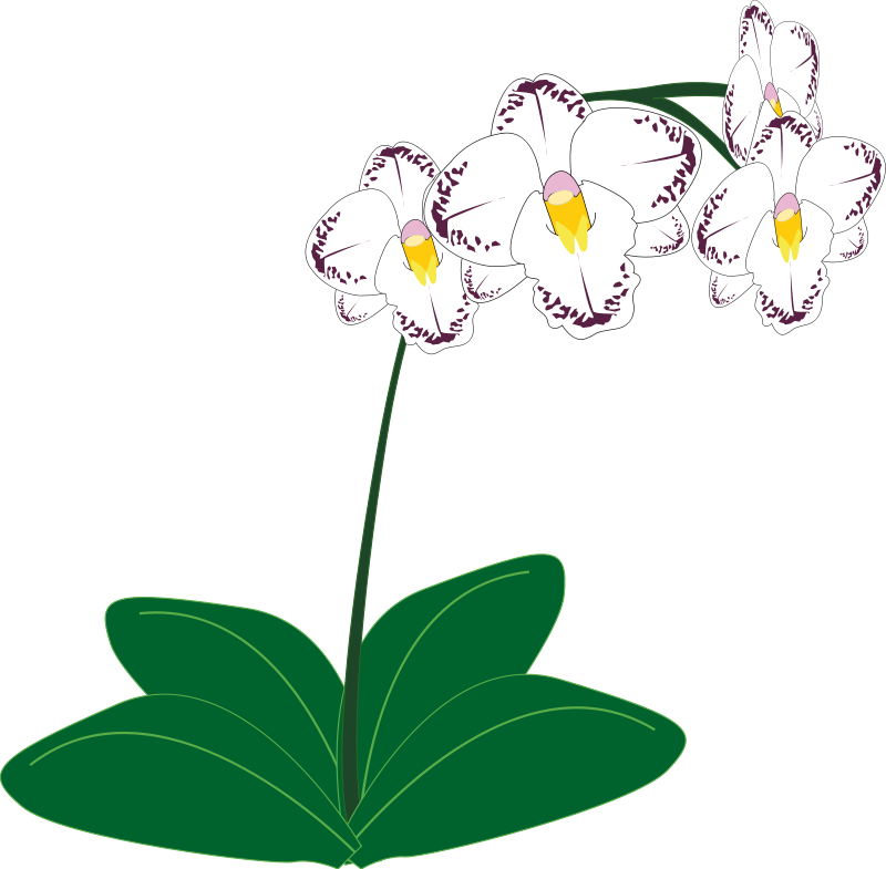 Free Orchid