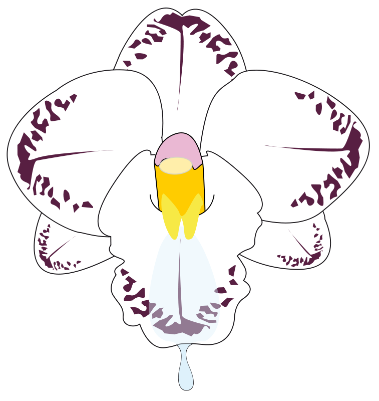 Free wild Orchid