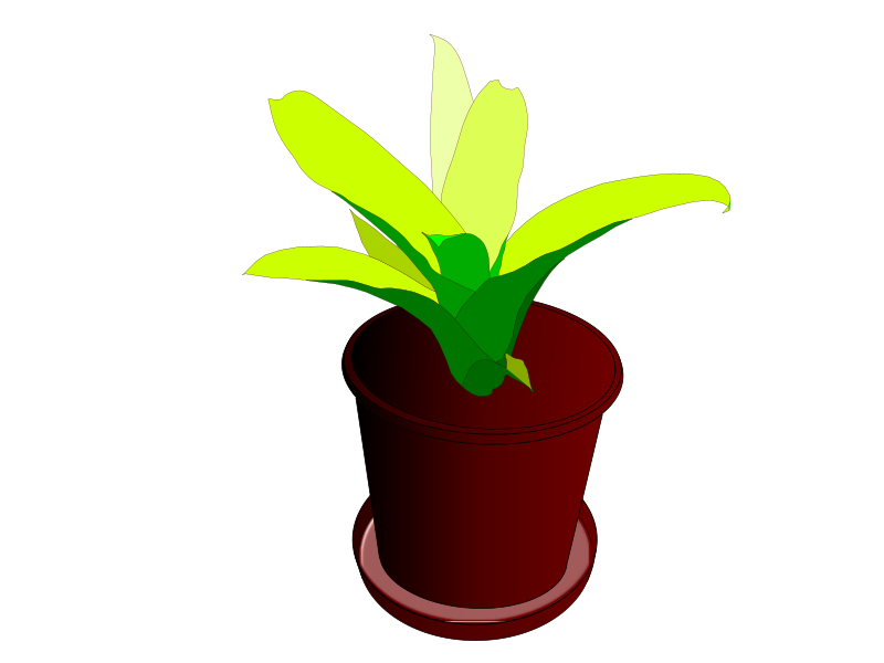 Free Bromeliad in a pot
