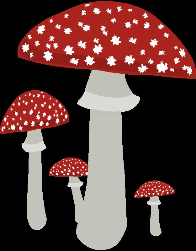 Free Mushrooms 4